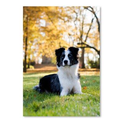 Americanflat Wonderful Dream Australian Shepard Dog Photographic Print
