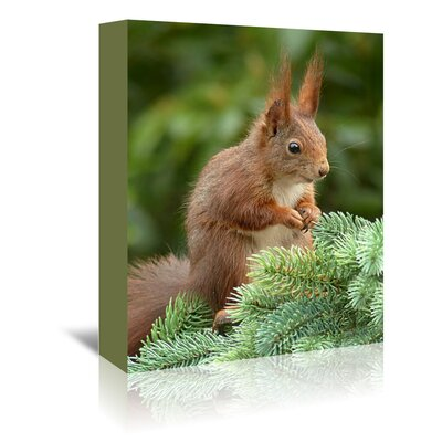 Americanflat Wonderful Dream Animal Squirrel Nature Photographic Print Wrapped on Canvas