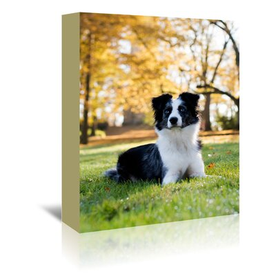 Americanflat Wonderful Dream Australian Shepard Dog Photographic Print Wrapped on Canvas