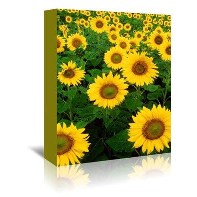 Americanflat Wonderful Dream Sunflower Blossom Field Photographic Print Wrapped on Canvas