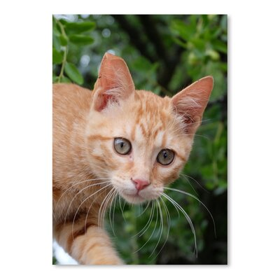 Americanflat Wonderful Dream Lovely Red Cat Animal Photographic Print