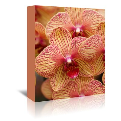 Americanflat Wonderful Dream Colourful Exotic Orchid Photographic Print Wrapped on Canvas