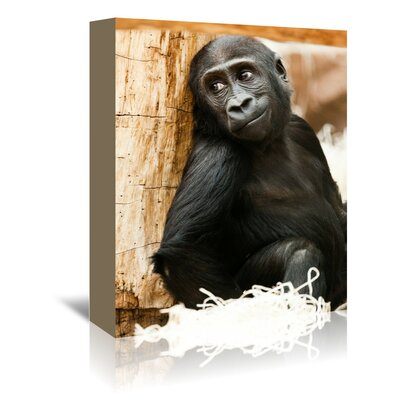 Americanflat Wonderful Dream Baby Monkey Ape Animal Photographic Print Wrapped on Canvas