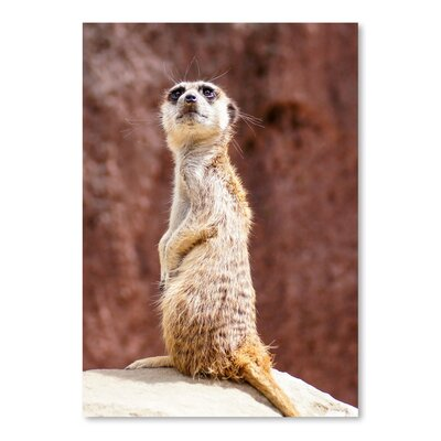 Americanflat Wonderful Dream African Meerkat Animal Photographic Print