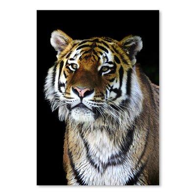 Americanflat Wonderful Dream Wildlife Tiger Nature Photographic Print