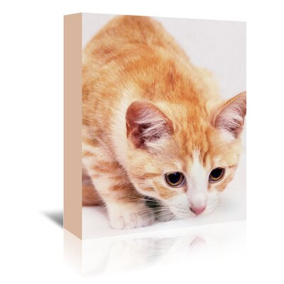 Americanflat Wonderful Dream Cute Cat Photographic Print Wrapped on Canvas