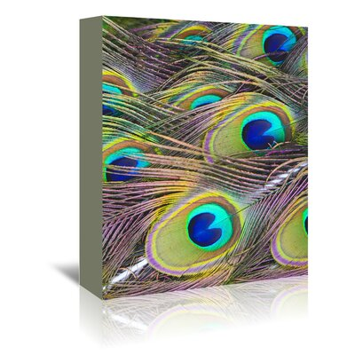 Americanflat Wonderful Dream Peacock Bird Pattern Feather Graphic Art Wrapped on Canvas