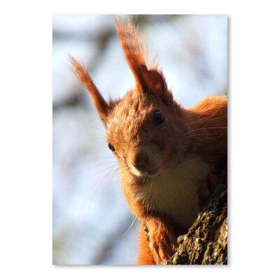 Americanflat Wonderful Dream Mammal Squirrel Animal Photographic Print