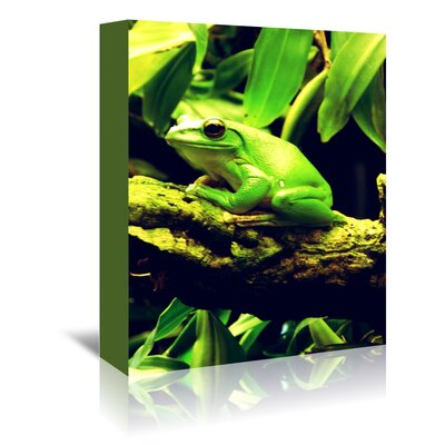 Americanflat Wonderful Dream Green Wildlife Frog Animal Photographic Print Wrapped on Canvas