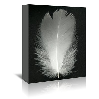 Americanflat Wonderful Dream Feather Bird Photographic Print Wrapped on Canvas