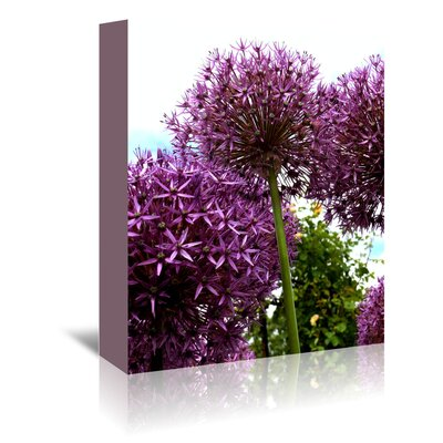 Americanflat Wonderful Dream Alliums Flower 2 Photographic Print Wrapped on Canvas
