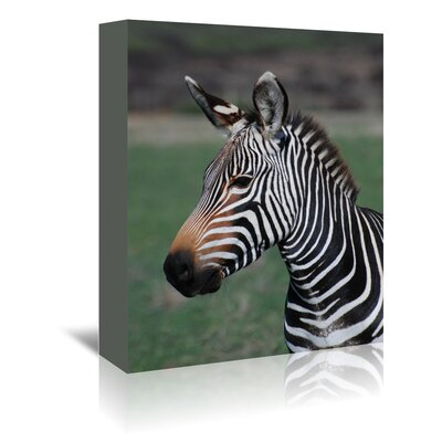 Americanflat Wonderful Dream Wildlife Zebra Africa Photographic Print Wrapped on Canvas