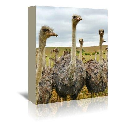 Americanflat Wonderful Dream Ostrich Australian Bird Photographic Print Wrapped on Canvas