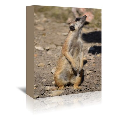 Americanflat Wonderful Dream Meerkat in the Nature Wildlife Photographic Print Wrapped on Canvas