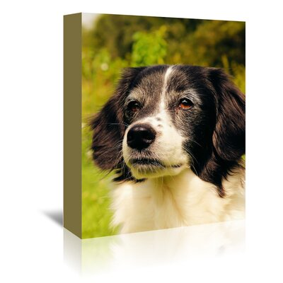 Americanflat Wonderful Dream Lovely Dog Pet Animal Photographic Print Wrapped on Canvas