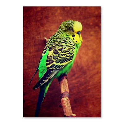 Americanflat Wonderful Dream Wonderful Budgie Bird Animal Photographic Print