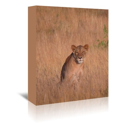 Americanflat Wonderful Dream Lion Wildlife Africa Cat Photographic Print Wrapped on Canvas