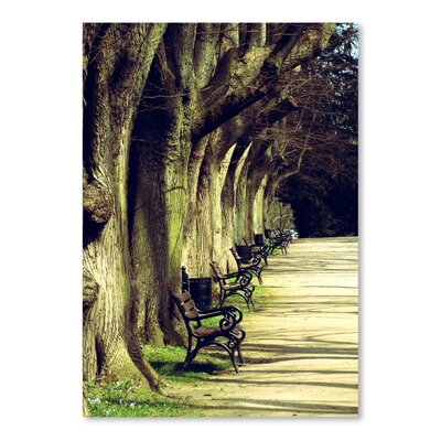 Americanflat Wonderful Dream Tree Avenue Landscape Photographic Print