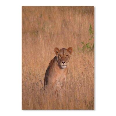 Americanflat Wonderful Dream Lion Wildlife Africa Cat Photographic Print