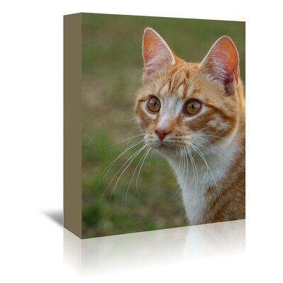 Americanflat Wonderful Dream Dangerous Tiger Cat Photographic Print Wrapped on Canvas