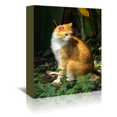 Americanflat Wonderful Dream Cat Pet Animal Nature Photographic Print Wrapped on Canvas