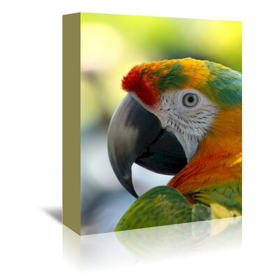 Americanflat Wonderful Dream Colourful Parrot Animal Photographic Print Wrapped on Canvas