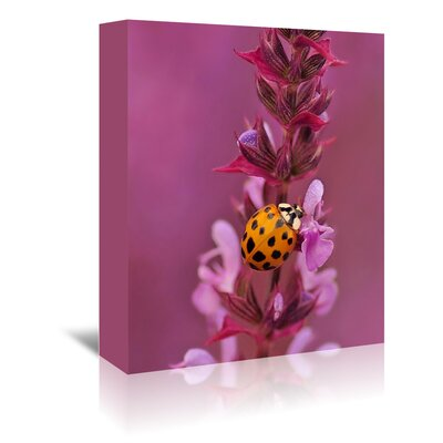 Americanflat Wonderful Dream Flower with Ladybug Photographic Print Wrapped on Canvas