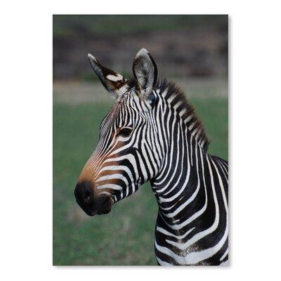Americanflat Wonderful Dream Wildlife Zebra Africa Photographic Print