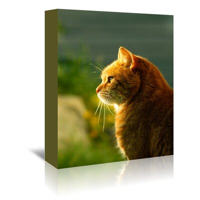 Americanflat Wonderful Dream Wonderful Cat with Sun Photographic Print Wrapped on Canvas