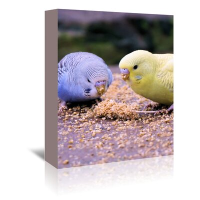 Americanflat Wonderful Dream Eating Budgie Bird Wildlife Photographic Print Wrapped on Canvas