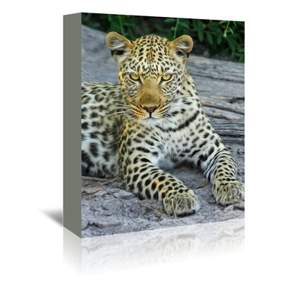 Americanflat Wonderful Dream Leopard Animal Cat Gepard Photographic Print Wrapped on Canvas