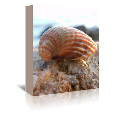Americanflat Wonderful Dream Sea Shell Style Photographic Print Wrapped on Canvas