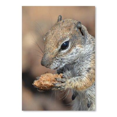 Americanflat Wonderful Dream Squirrel Mammal Animal Photographic Print