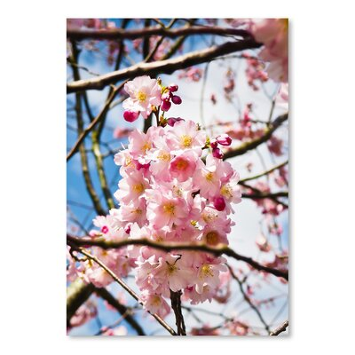 Americanflat Wonderful Dream Asia Cherry Blossom Photographic Print