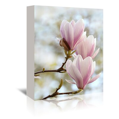 Americanflat Wonderful Dream Magnolia Flower Bloom Photographic Print Wrapped on Canvas