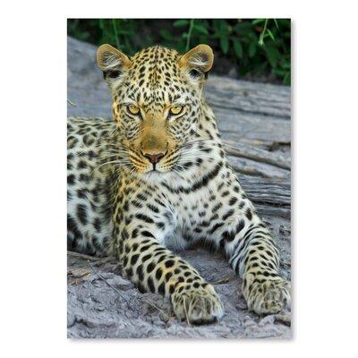 Americanflat Wonderful Dream Leopard Photographic Print