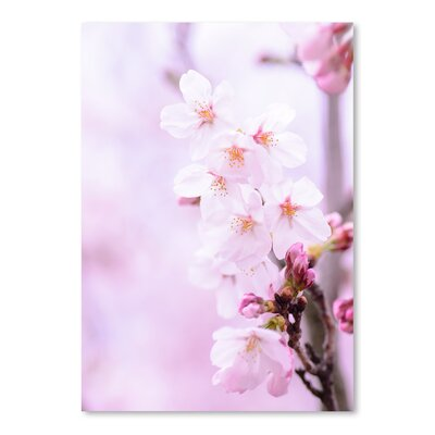 Americanflat Wonderful Dream Cherry Blossom Japan Photographic Print