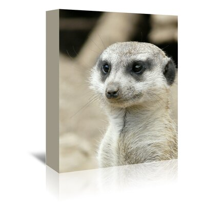 Americanflat Wonderful Dream Meerkat Mammal Photographic Print Wrapped on Canvas