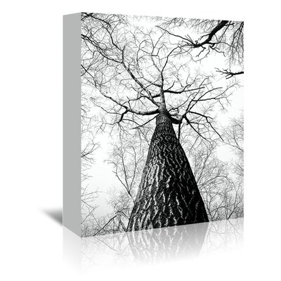 Americanflat Wonderful Dream Branches Tree Nature Landscape Photographic Print Wrapped on Canvas