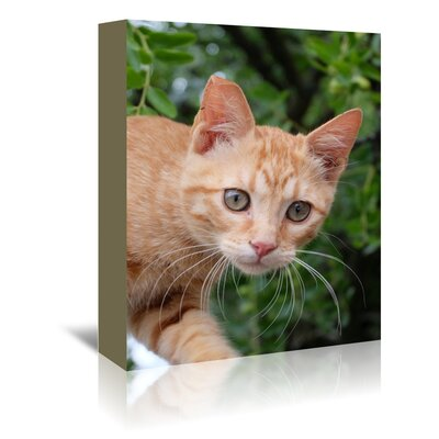 Americanflat Wonderful Dream Lovely Red Cat Animal Photographic Print Wrapped on Canvas