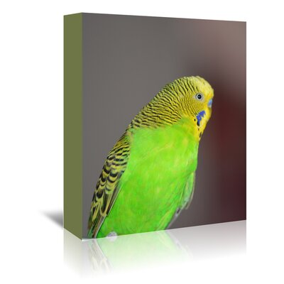 Americanflat Wonderful Dream Budgie Bird Photographic Print Wrapped on Canvas