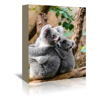 Americanflat Wonderful Dream Australian Koala Bear Animal Photographic Print Wrapped on Canvas