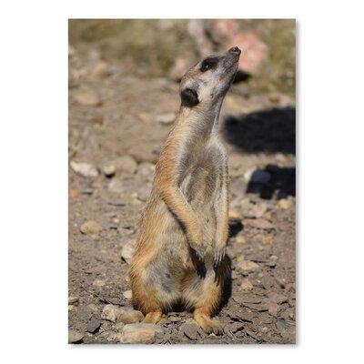 Americanflat Wonderful Dream Meerkat in the Nature Wildlife Photographic Print