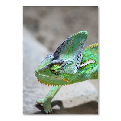 Americanflat Wonderful Dream Exotic Reptile 2 Photographic Print