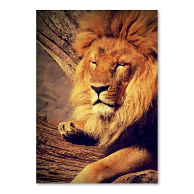 Americanflat Wonderful Dream Lion Wildlife Cat Animal Africa Photographic Print