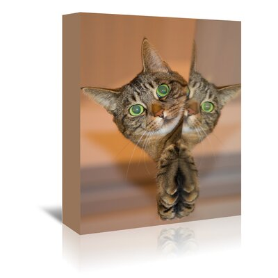 Americanflat Wonderful Dream Cute and Sweet Cat Photographic Print Wrapped on Canvas