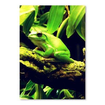 Americanflat Wonderful Dream Green Wildlife Frog Animal Photographic Print