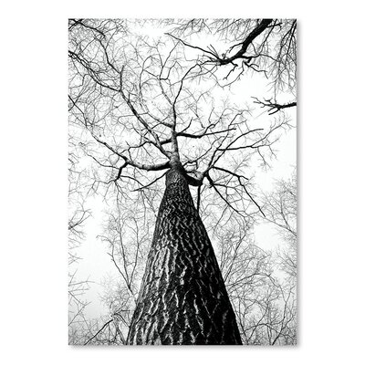 Americanflat Wonderful Dream Branches Tree Nature Landscape Photographic Print