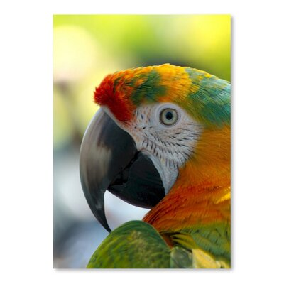 Americanflat Wonderful Dream Colourful Parrot Animal Photographic Print