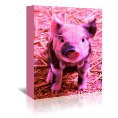 Americanflat Wonderful Dream Funky Piglet Farm Photographic Print Wrapped on Canvas